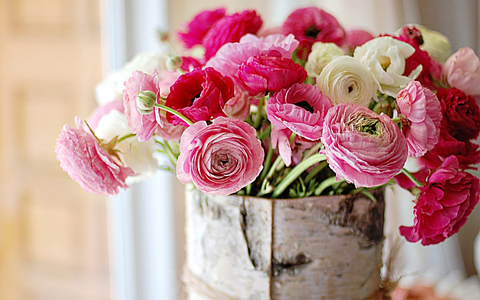 Nature___Flowers_Fresh_flowers_peonies_066084_