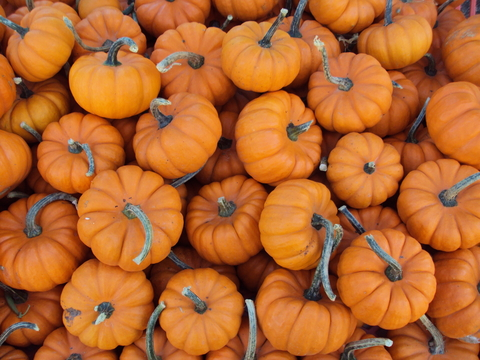 mini_pumpkins