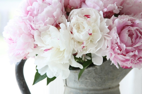 White Peonies -Coco and Cowe